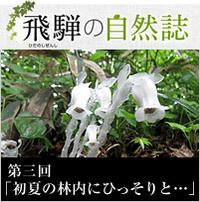 <span>飛騨の自然誌 </span>第三回「初夏の林内にひっそりと・・・」