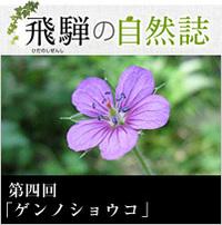 <span>飛騨の自然誌 </span>第四回「ゲンノショウコ」
