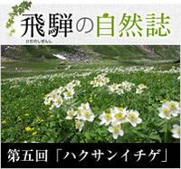 <span>飛騨の自然誌 </span>第五回「ハクサンイチゲ」