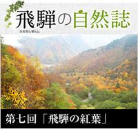 <span>飛騨の自然誌 </span>第七回「飛騨の紅葉」
